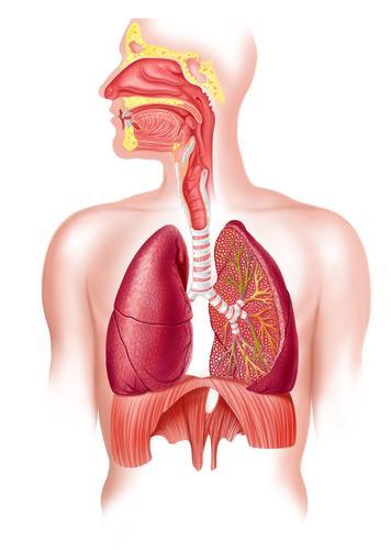 légzési betegségek dohányzással)