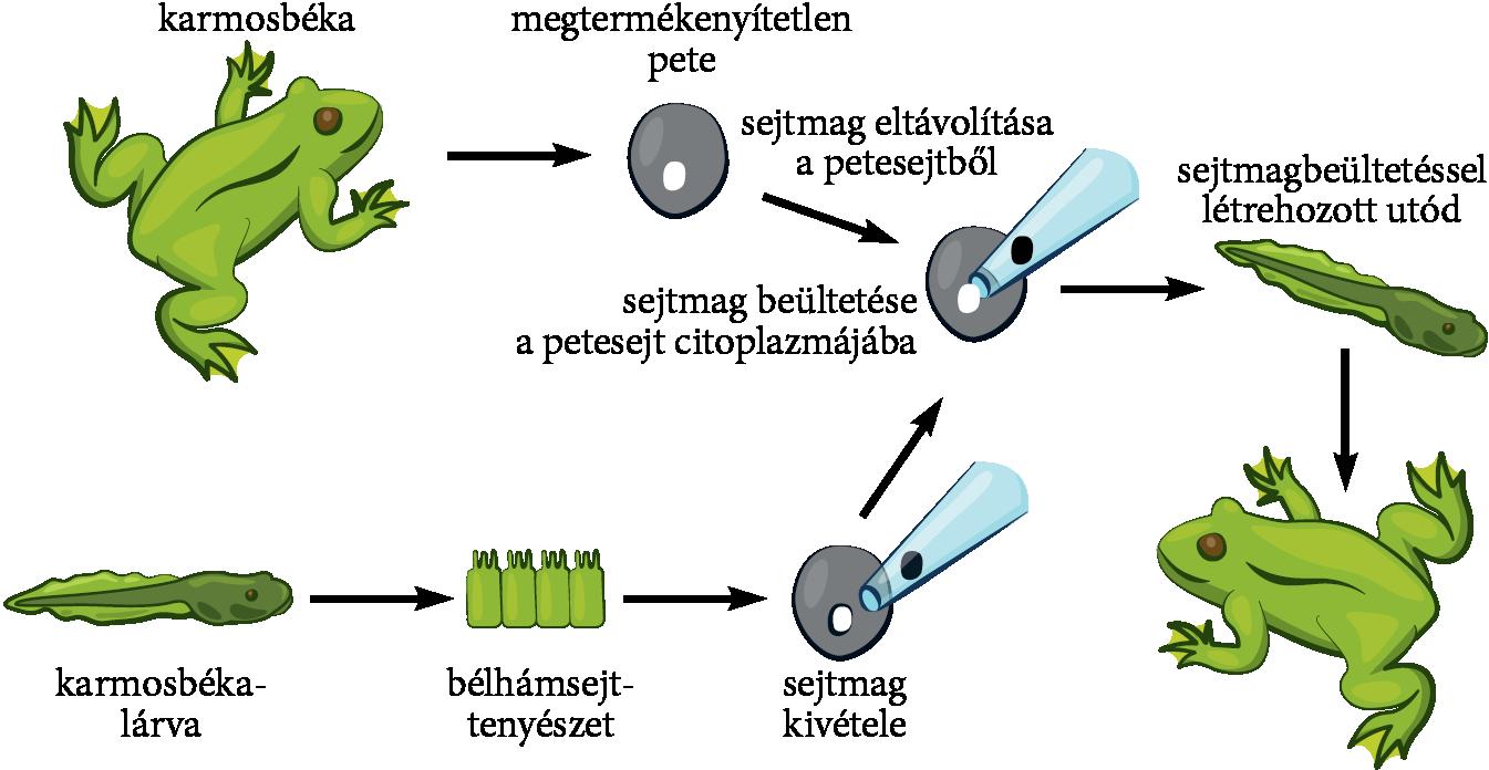 rák géntechnológia