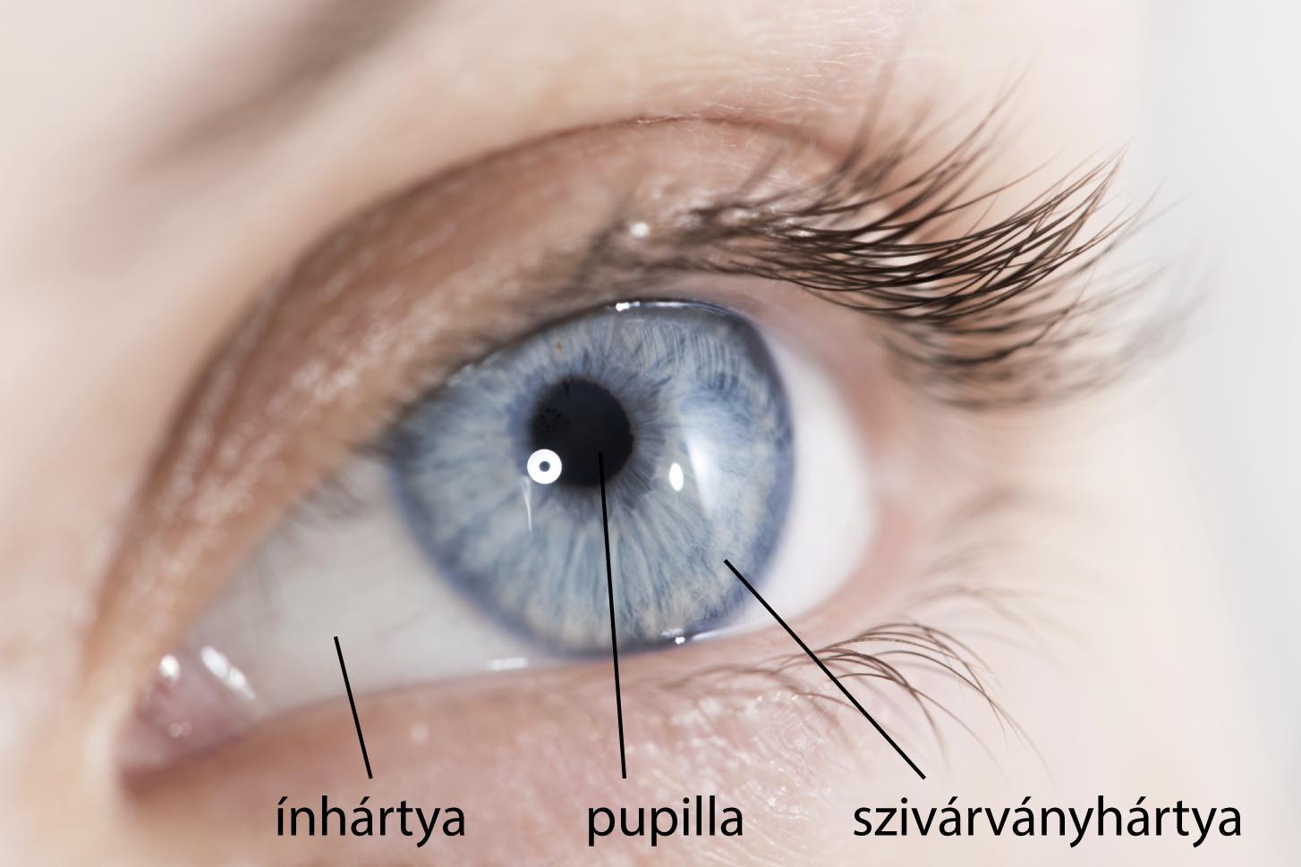 az egyik szem látásának különbsége