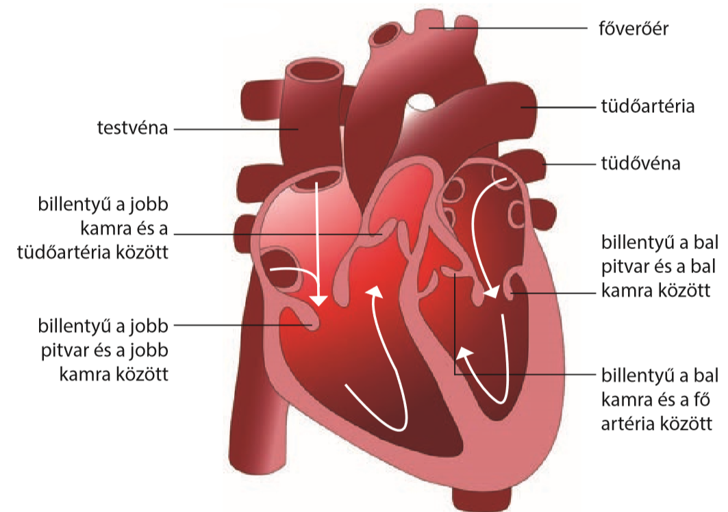 a szív hatása a látásra rövidlátás 70
