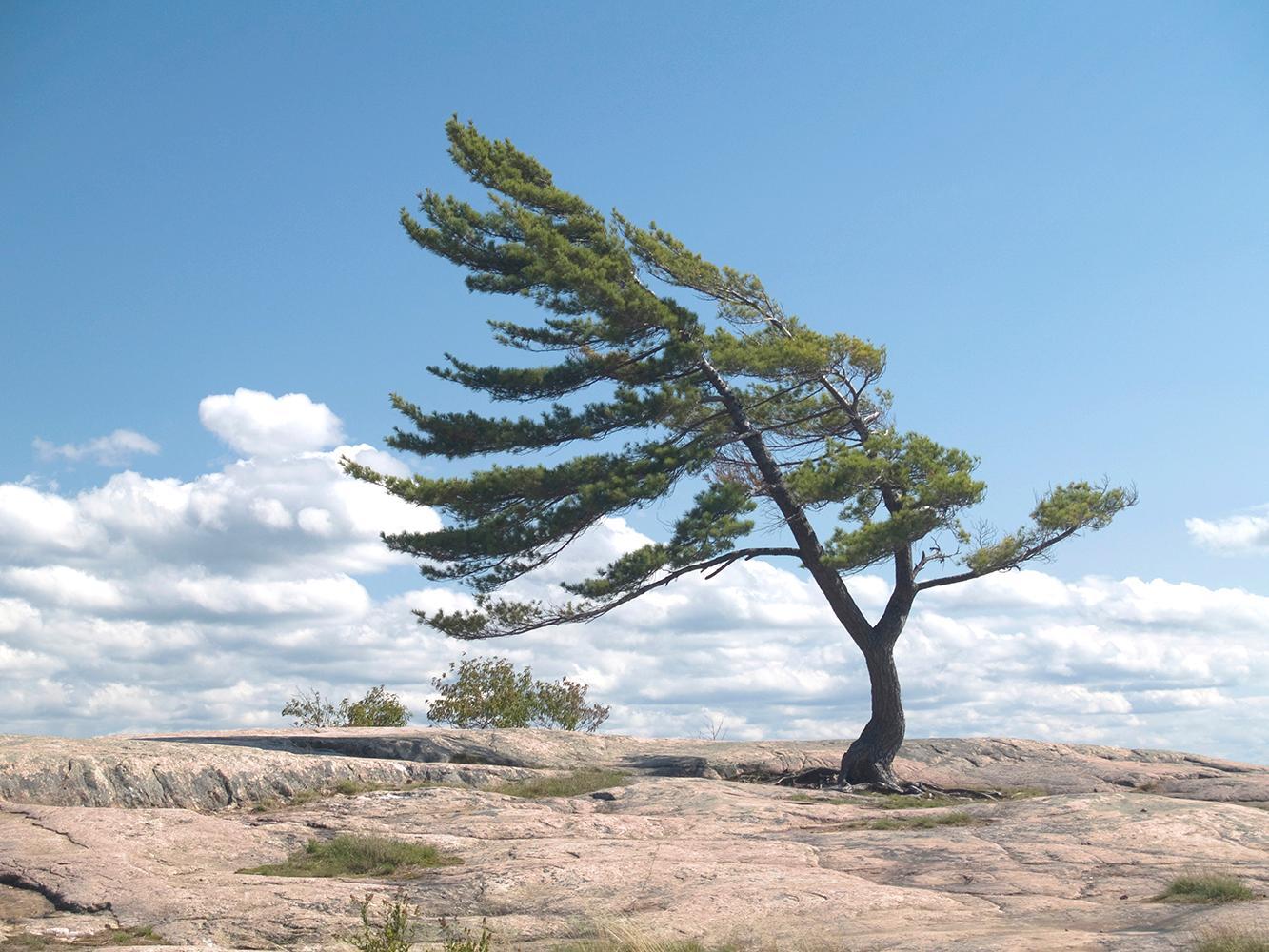erős szél hatása a szervezetre
