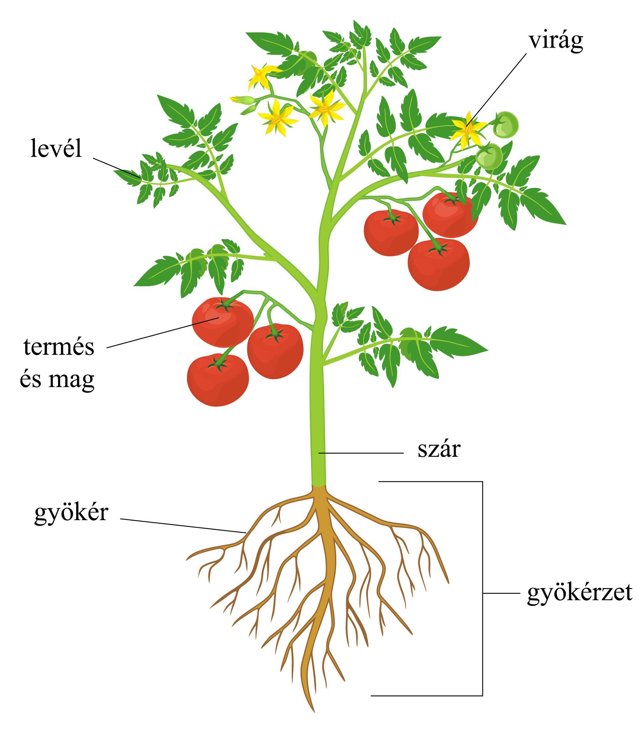 - A 10 legismertebb légtisztító növény - több oxigént a szobába!